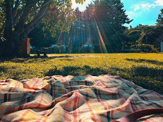 POV from a picnic blanket in a park, staring at the trees